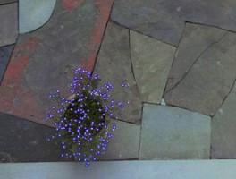 About The Artist Garden