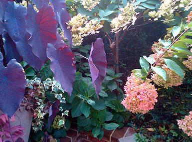 garden plant elements